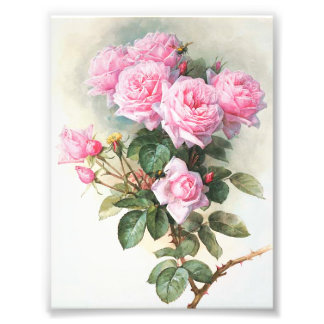 Vintage Pink Roses Painting Photographic Print