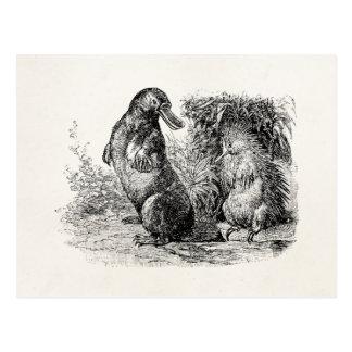 Vintage Platypus Porcupine Anteater Template Postcard