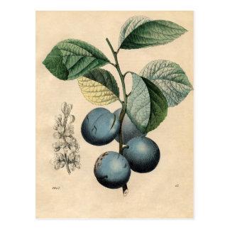 Vintage Plum Botanical Print iPhone 8 Cases Postcard