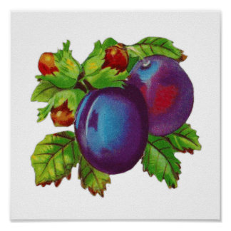 Vintage Plums and Cherries Kitchen Wall Print