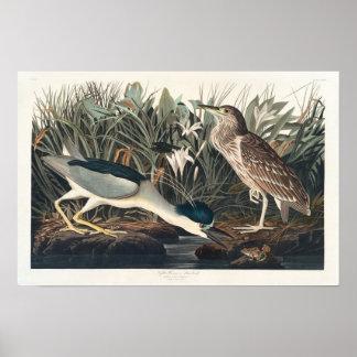 Vintage Qua-Bird Audubon Poster Print