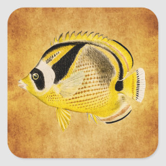 Vintage Raccoon Butterfly Fish - Antique Hawaiian Square Sticker