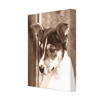 Vintage Rat Terrier Canvas Wrap