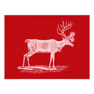 Vintage Red and White Reindeer Christmas Photo Print