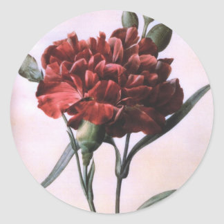 Vintage Red Carnation Classic Round Sticker