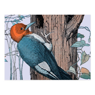 Vintage Red Head Woodpecker Tree Postcard