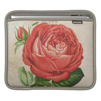 Vintage Red Hybrid Perpetual, Paul Neyron Rose iPad Sleeve