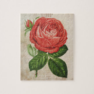 Vintage Red Hybrid Perpetual, Paul Neyron Rose Jigsaw Puzzle