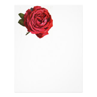 Vintage red rose close-up letterhead