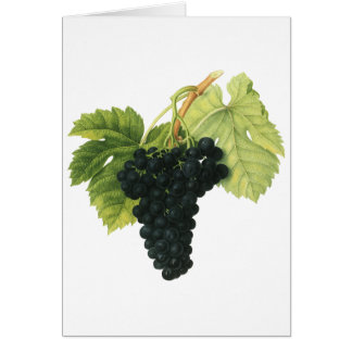 Vintage Red Wine Organic Grape Cluster, Food Fruit Card