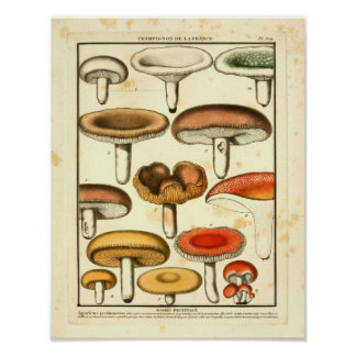 Vintage Red Yellow Green Mushrooms French Print