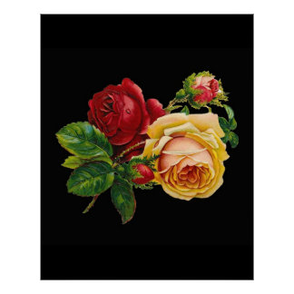 Vintage red yellow rose against black - accessory poster