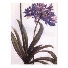 Vintage Redoute Purple Flower Postcard