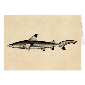 Vintage Reef Shark Illustration - Black Tipped Card
