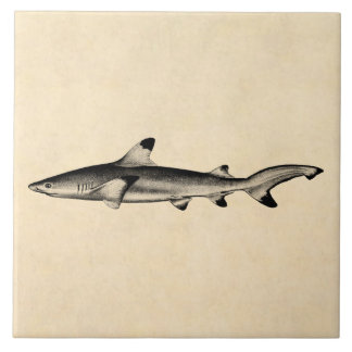 Vintage Reef Shark Illustration - Black Tipped Tile