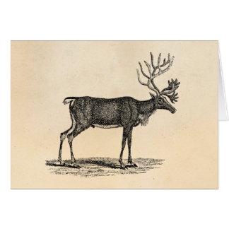 Vintage Reindeer Illustration -1800's Christmas Card