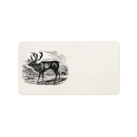 Vintage Reindeer Personalized Deer Illustration