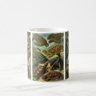 Vintage Reptiles and Amphibians by Ernst Haeckel Coffee Mug