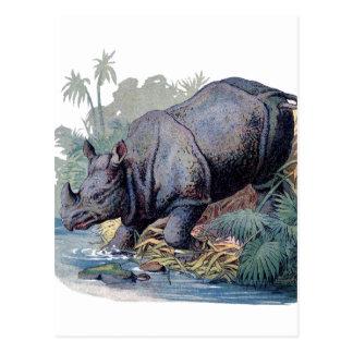 Vintage Rhino Postcard