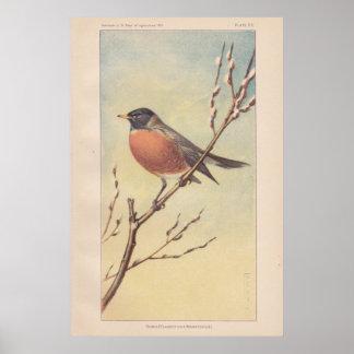 Vintage Robin Poster