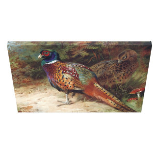 Vintage Rooster and Hen Pheasant Canvas Print