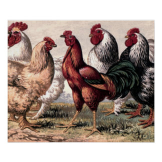 Vintage Roosters and Chickens Country wall art
