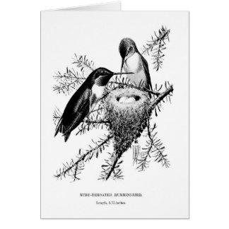 Vintage Ruby-Throated Hummingbird (Blank Inside), Card