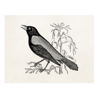 Vintage Rusty Crow Blackbird Bird - Retro Birds Postcard