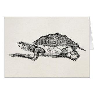 Vintage Salt Water Terrapin Turtle - Template