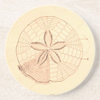 Vintage Sand Dollar Illustration coaster