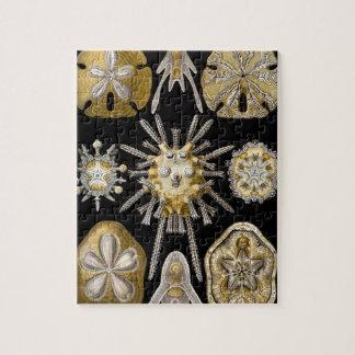 Vintage Sand Dollars Sea Urchins by Ernst Haeckel Puzzle