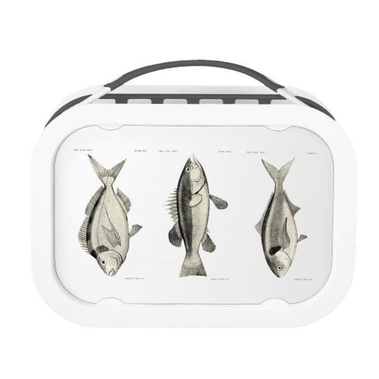 Vintage Science NZ Fish Lunch Box