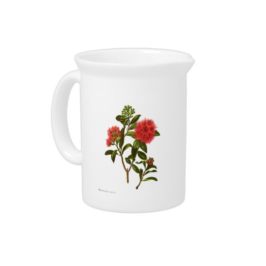 Vintage Science NZ Flowers - Meterosideros florida Pitcher