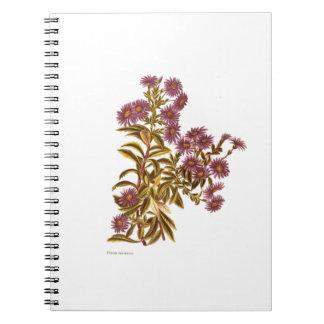 Vintage Science NZ Flowers - Olearia semidentata Notebook