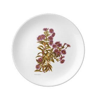 Vintage Science NZ Flowers - Olearia semidentata Porcelain Plates