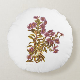 Vintage Science NZ Flowers - Olearia semidentata Round Pillow