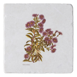 Vintage Science NZ Flowers - Olearia semidentata Trivet