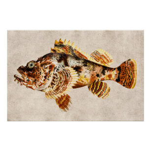 how to clean scorpion fish