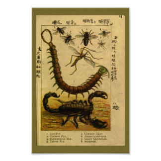 Vintage Scorpion Insects Natural History Print