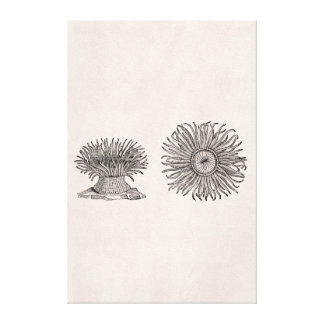 Vintage Sea Anemone Antique Parchment Template Canvas Print