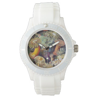 Vintage Sea Anemones, Actiniae by Ernst Haeckel Watch