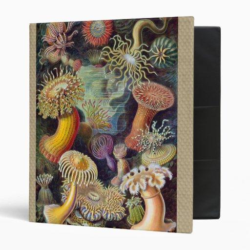 Vintage sea anemones scientific illustration binders