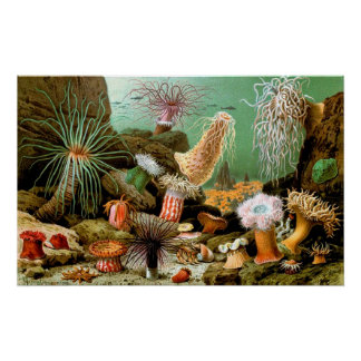 Vintage Sea anemones underwater scene Poster