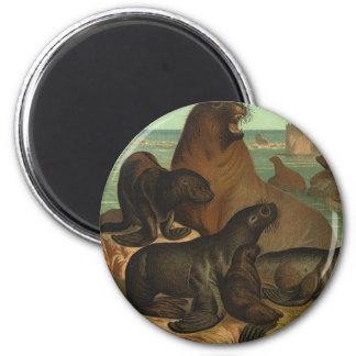 Vintage Sea Lions on the Beach, Marine Life Animal 2 Inch Round Magnet