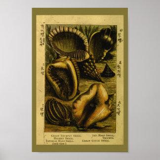 Vintage Sea Shells Conch Ocean Art Print