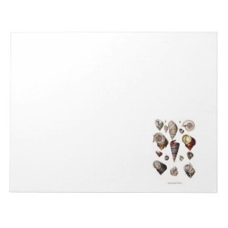 Vintage Sea Shells Personalized Retro Auger Shell Notepad