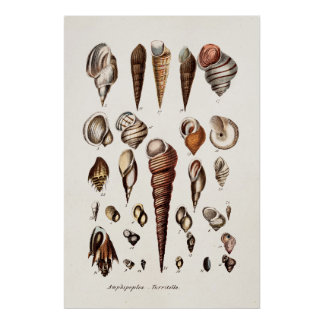 Vintage Sea Shells Personalized Retro Auger Shell Poster