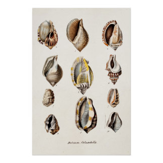 Vintage Sea Shells Personalized Retro Berge Shell Poster