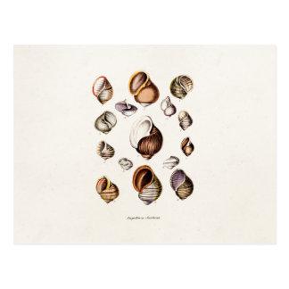 Vintage Sea Shells Personalized Retro Snail Shell Postcard