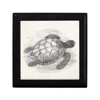 Vintage Sea Turtle Personalized Marine Turtles Gift Box